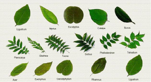 Çiçeksiz bitkilerden örnekler