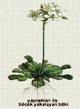 Metamorz değişime uğramış yapraklar